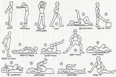 stretch chart  favosity